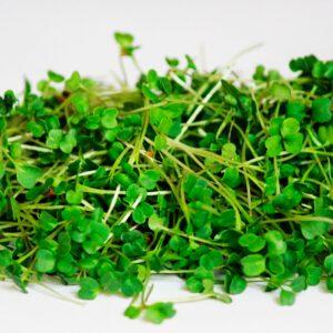 Микрогрин руккола купить микрозелень