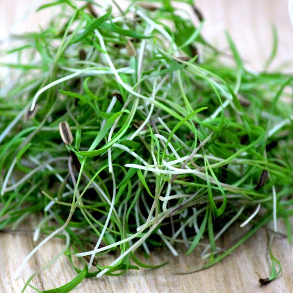 Микрогрин салата купить микрозелень