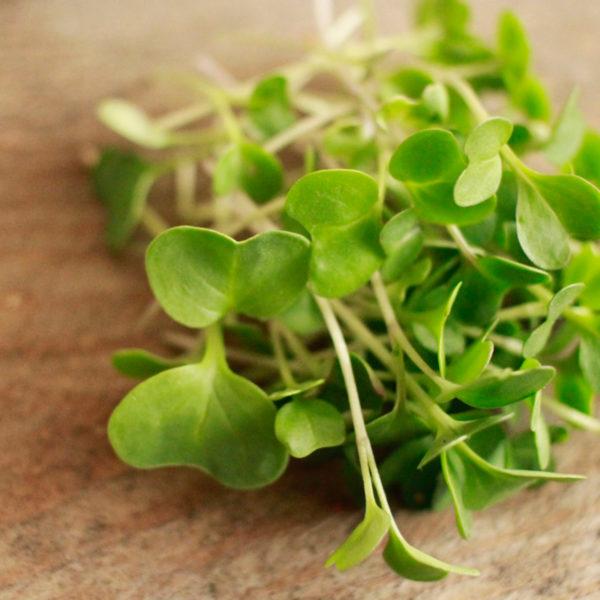 Микрогрин дайкона купить микрозелень